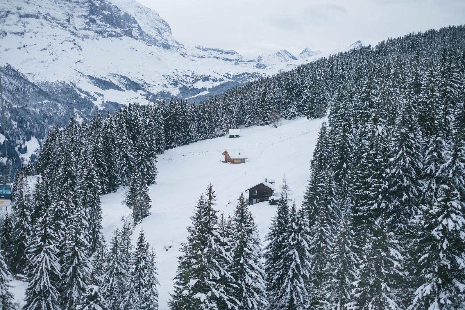 「樹木に囲まれる山小屋(雪山)樹木に囲まれる山小屋(雪山)」のフリー写真素材を拡大