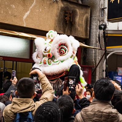 中国の春節を祝う伝統的な獅子舞、採青(ツァイチン)の写真