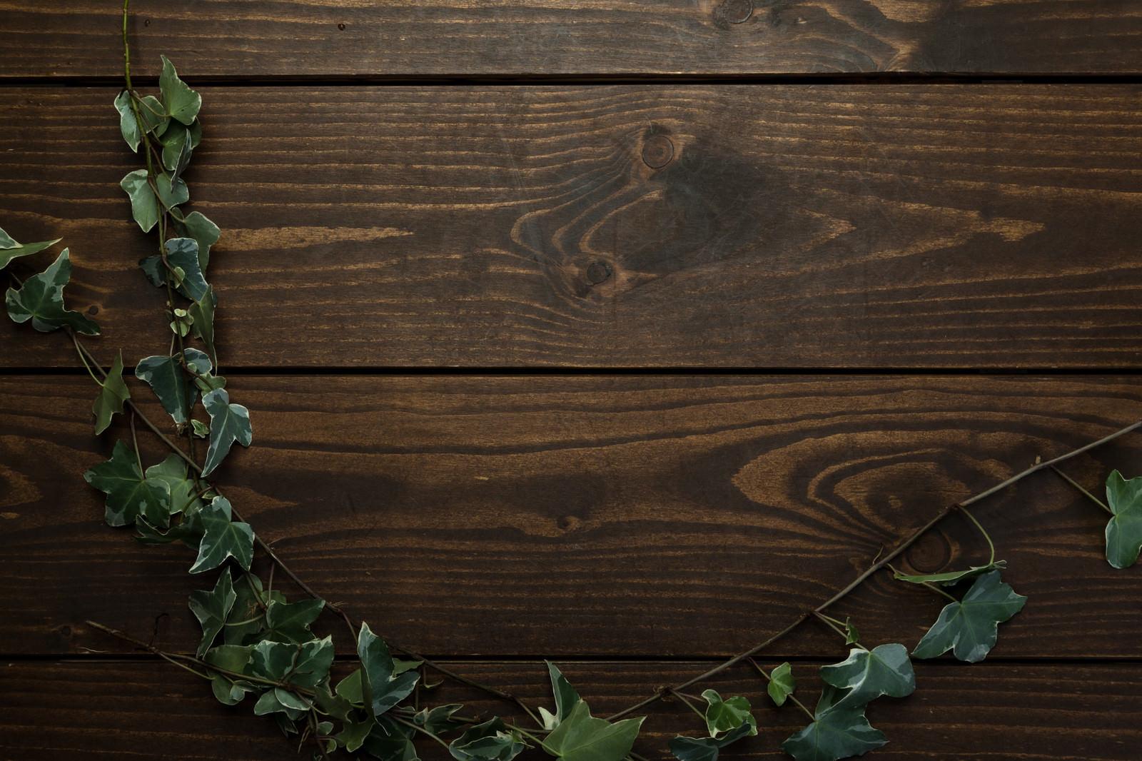 「木目テーブルに伸びる蔦」の写真