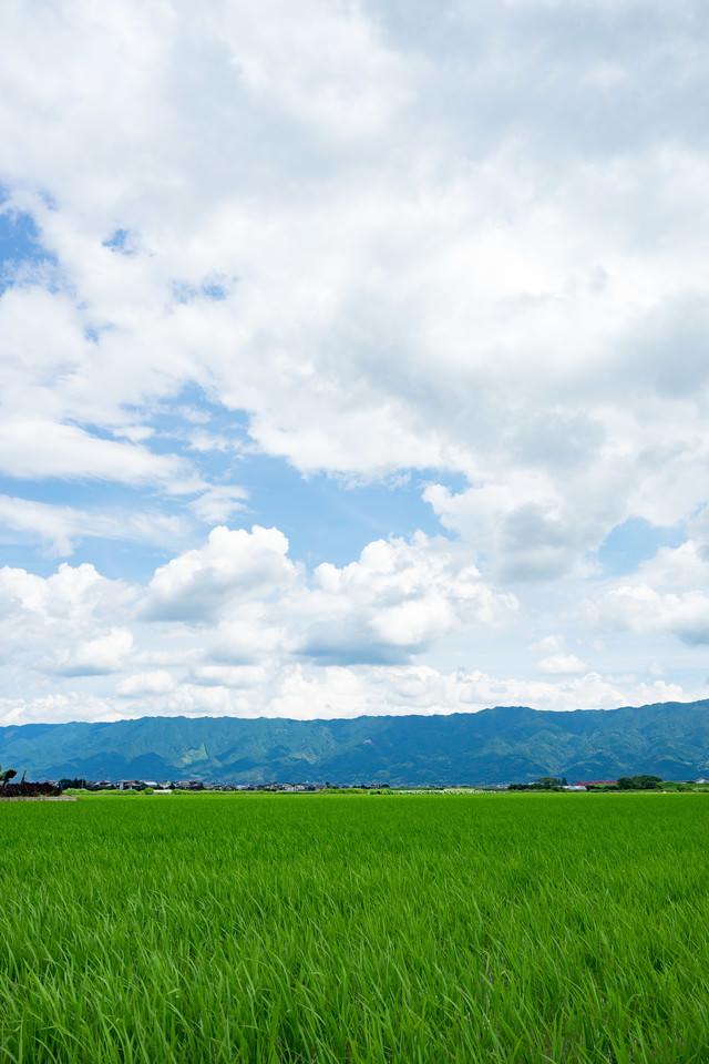 初夏の大刀洗の田畑の写真