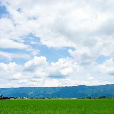 「初夏の大刀洗の田畑」の写真素材