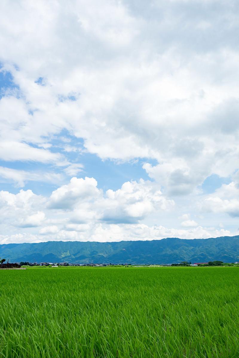 「初夏の大刀洗の田畑」の写真
