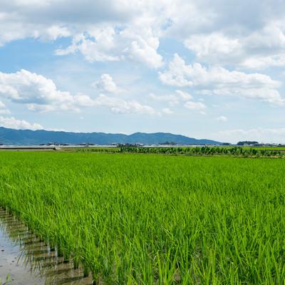 広がる田畑(福岡県大刀洗町)の写真