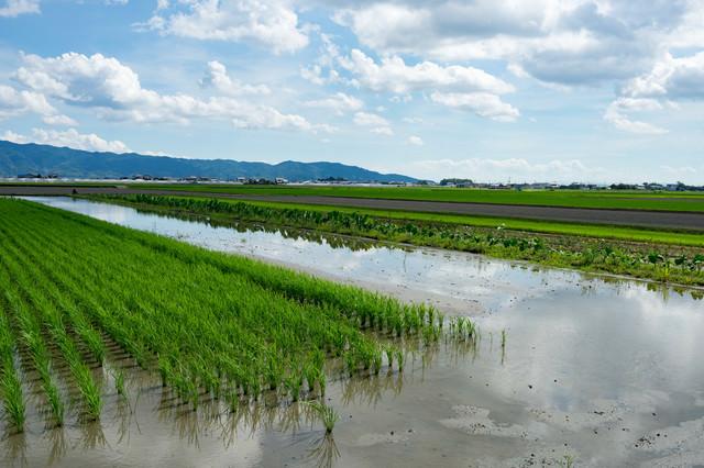 田んぼと青空(大刀洗の田園)の写真