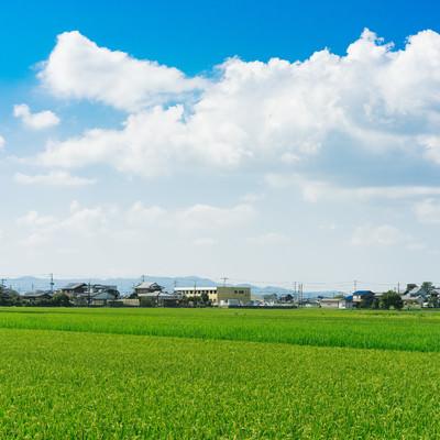 「田んぼと住宅街」の写真素材