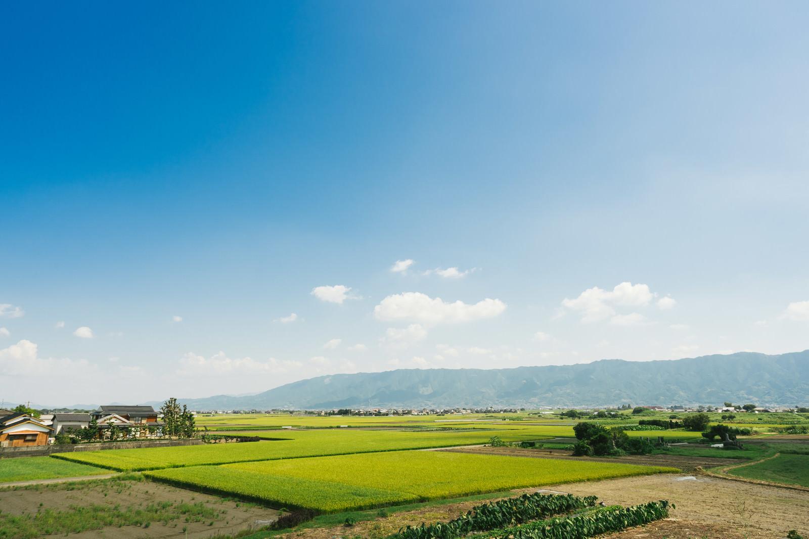 「大刀洗(筑後平野)の田園風景大刀洗(筑後平野)の田園風景」のフリー写真素材を拡大