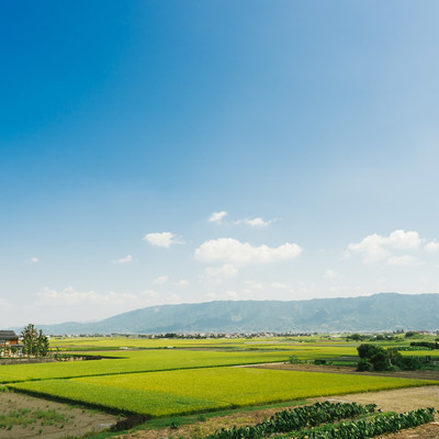 大刀洗(筑後平野)の田園風景の写真