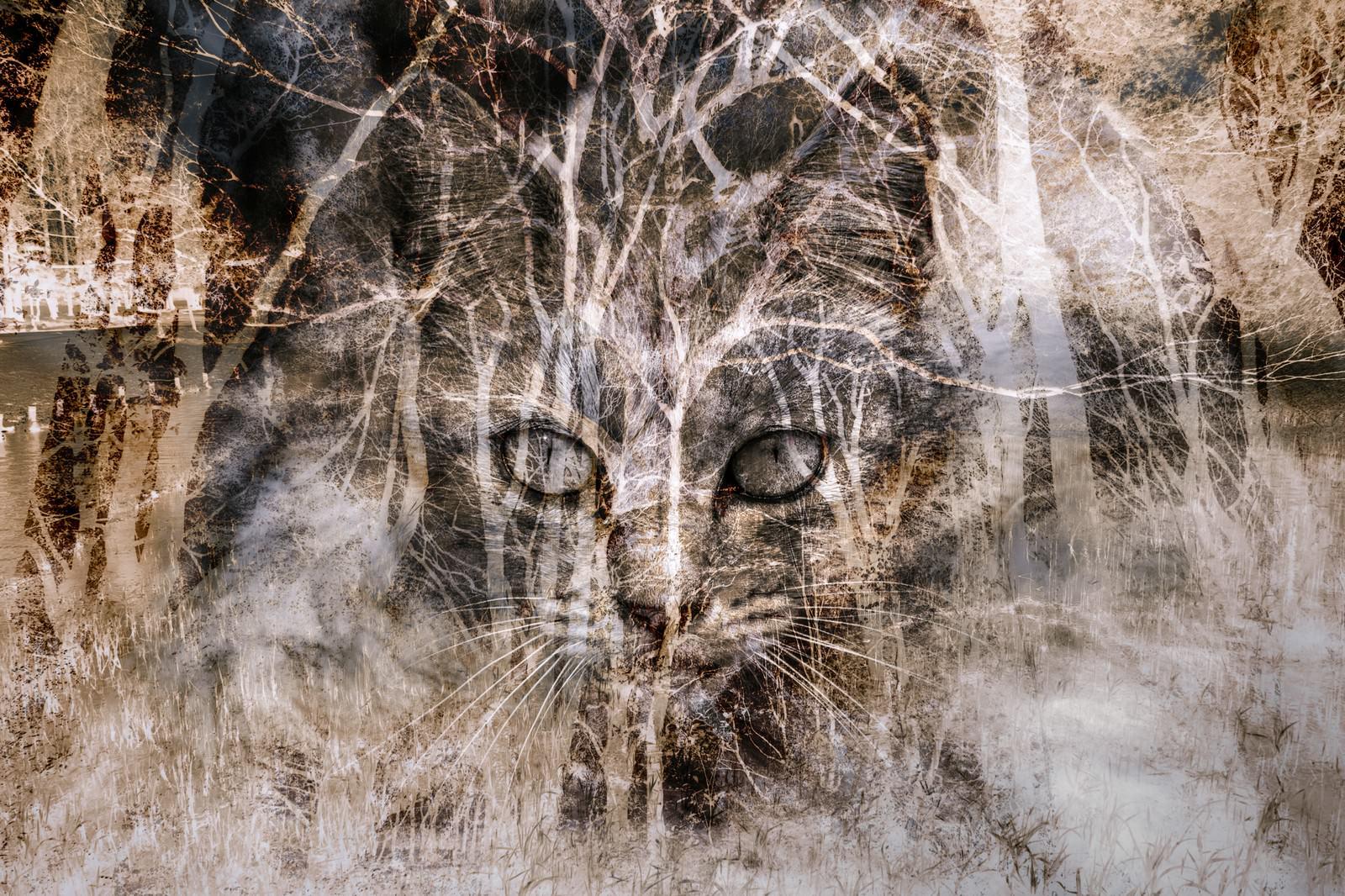 「猫のおもい(フォトモンタージュ)」の写真