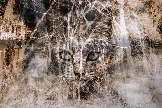 猫のおもい(フォトモンタージュ)の写真