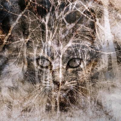 「猫のおもい(フォトモンタージュ)」の写真素材