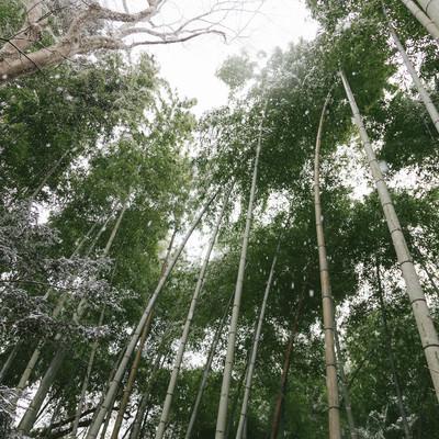 雪と竹林の写真