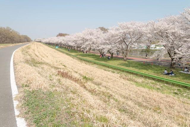 桜並木と花見人の写真