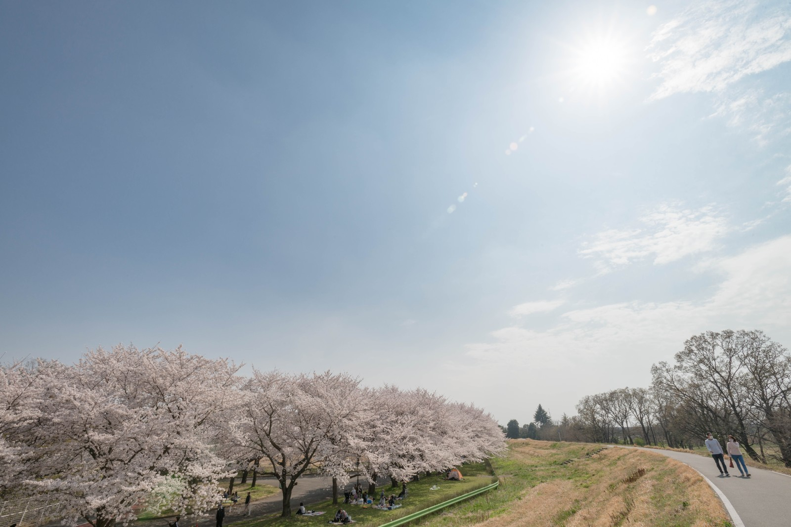 「花見日和」の写真