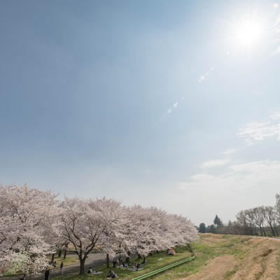花見日和の写真