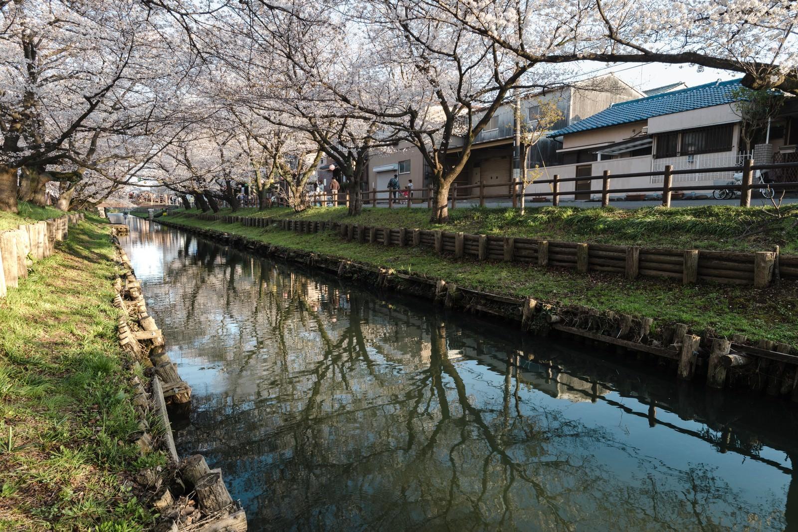 「桜トンネル(新河岸川)」の写真
