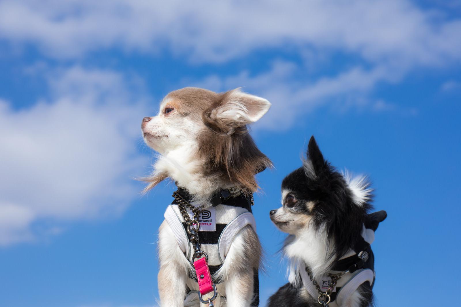 「今からあれ(フリスビーを投げてキャッチするやつ)をやると言われて傍観する犬二匹」の写真