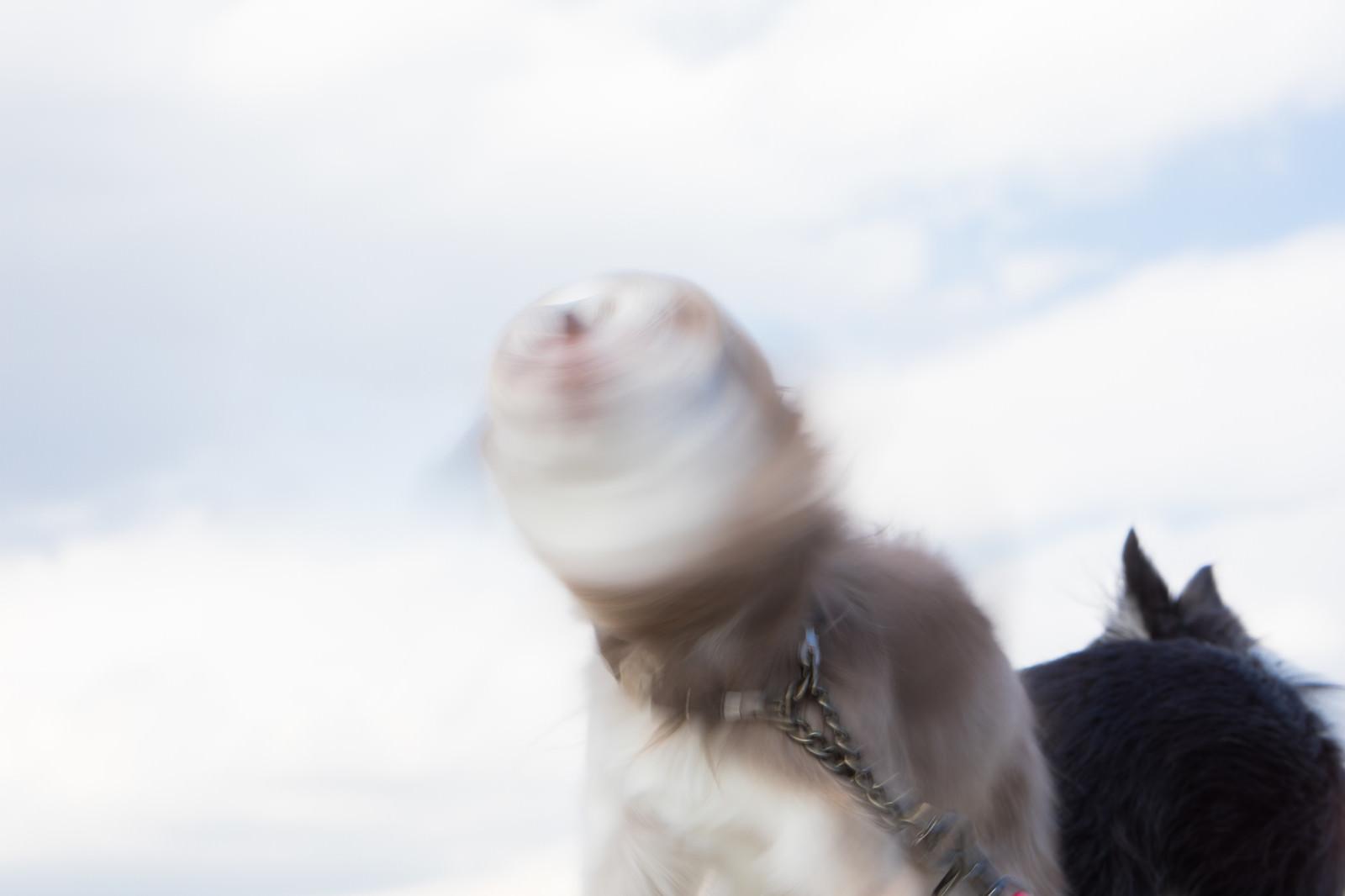 「犬ドリルゴゴゴ犬ドリルゴゴゴ」のフリー写真素材を拡大