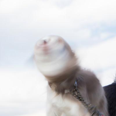 「犬ドリルゴゴゴ」の写真素材