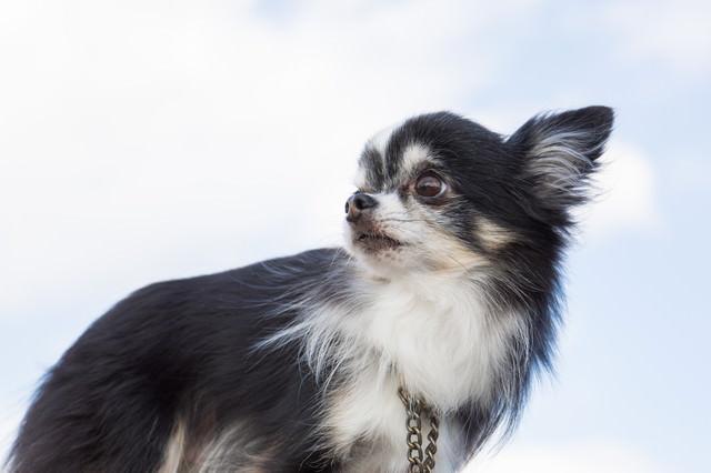 振り返る犬の写真