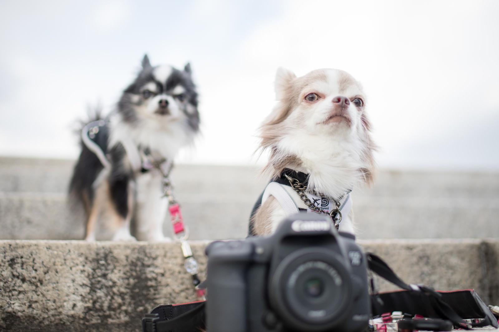「犬の撮影会に来ました」の写真