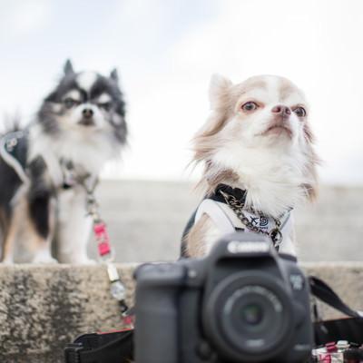 「犬の撮影会に来ました」の写真素材