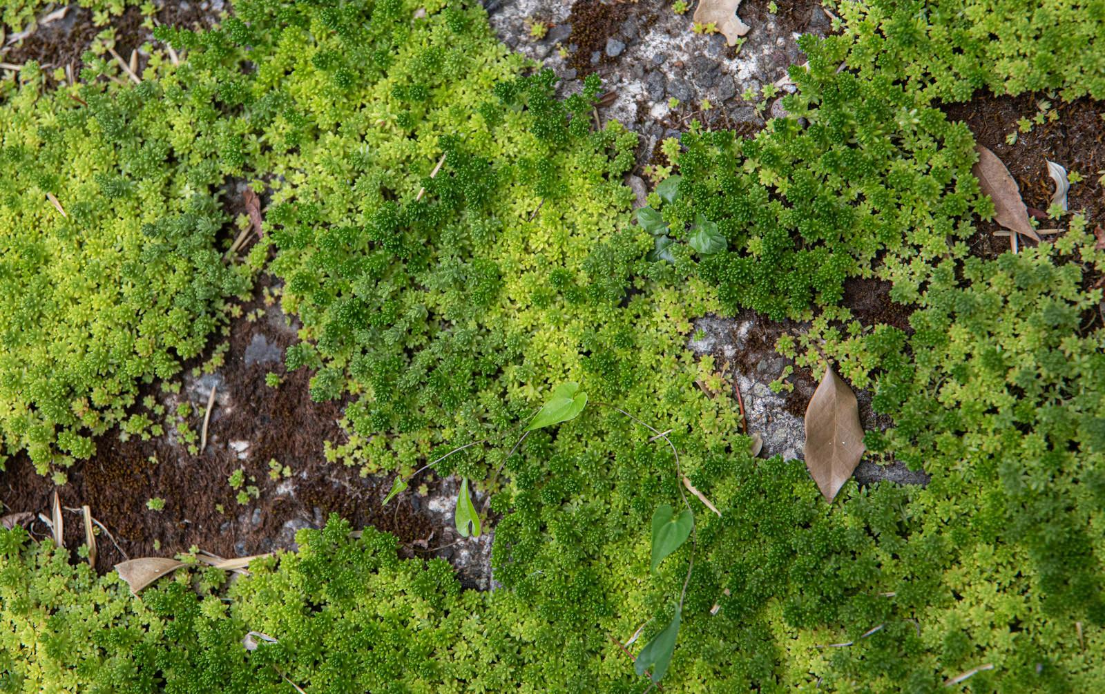 「コンクリート上に敷かれる緑」の写真