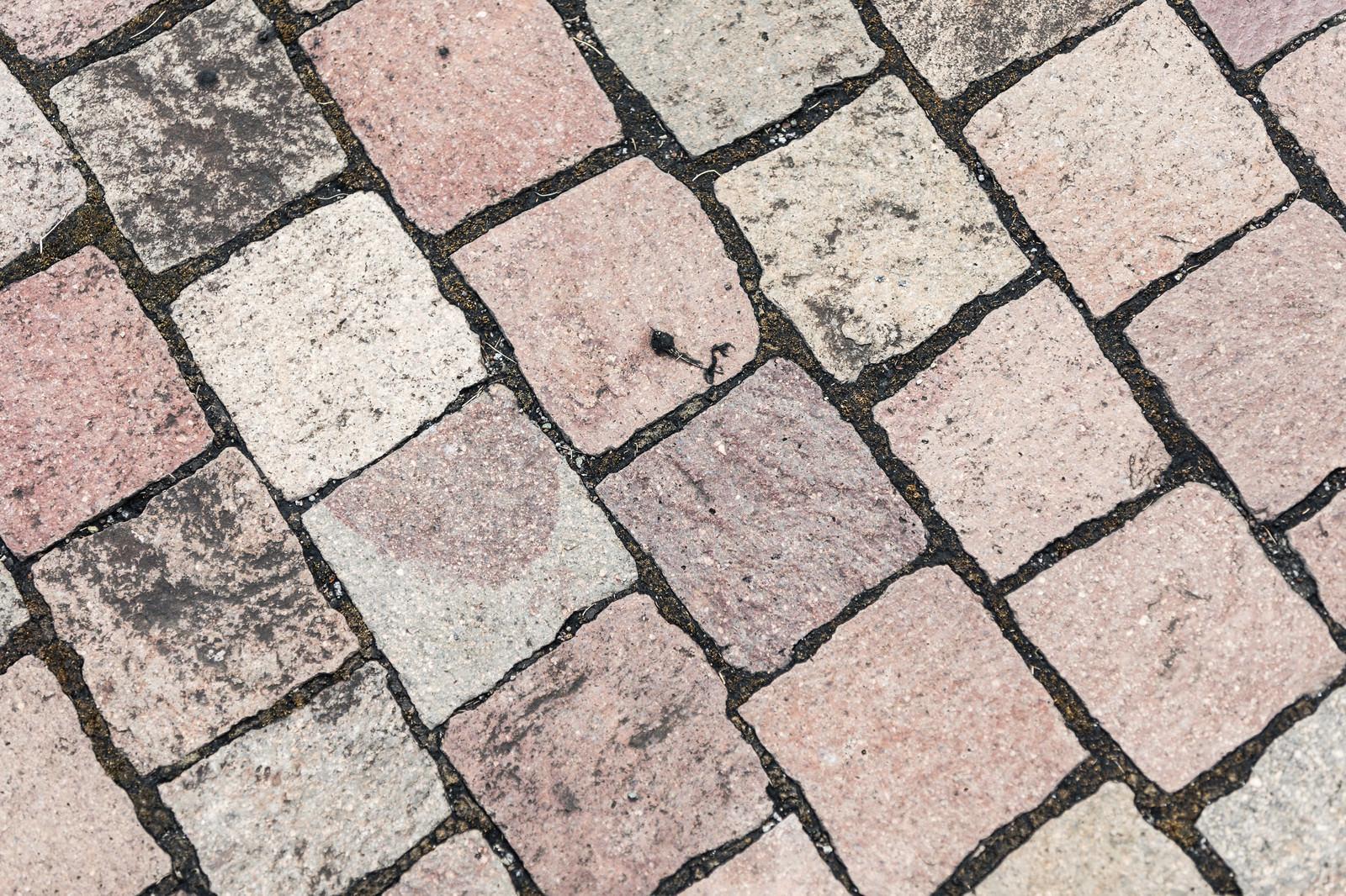 「地面に敷き詰められたレンガ調の正方形タイル(テクスチャ)」の写真