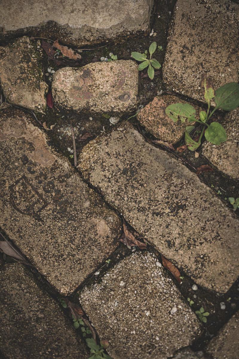 「間に雑草が生えた石垣(テクスチャ)」の写真