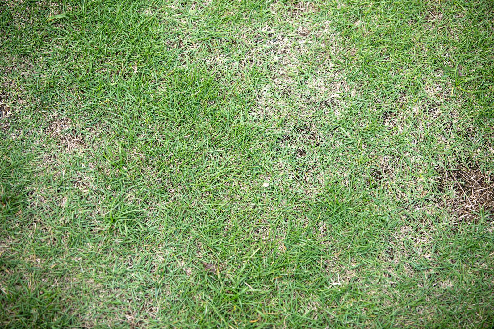 「芝の地面(テクスチャ)」の写真