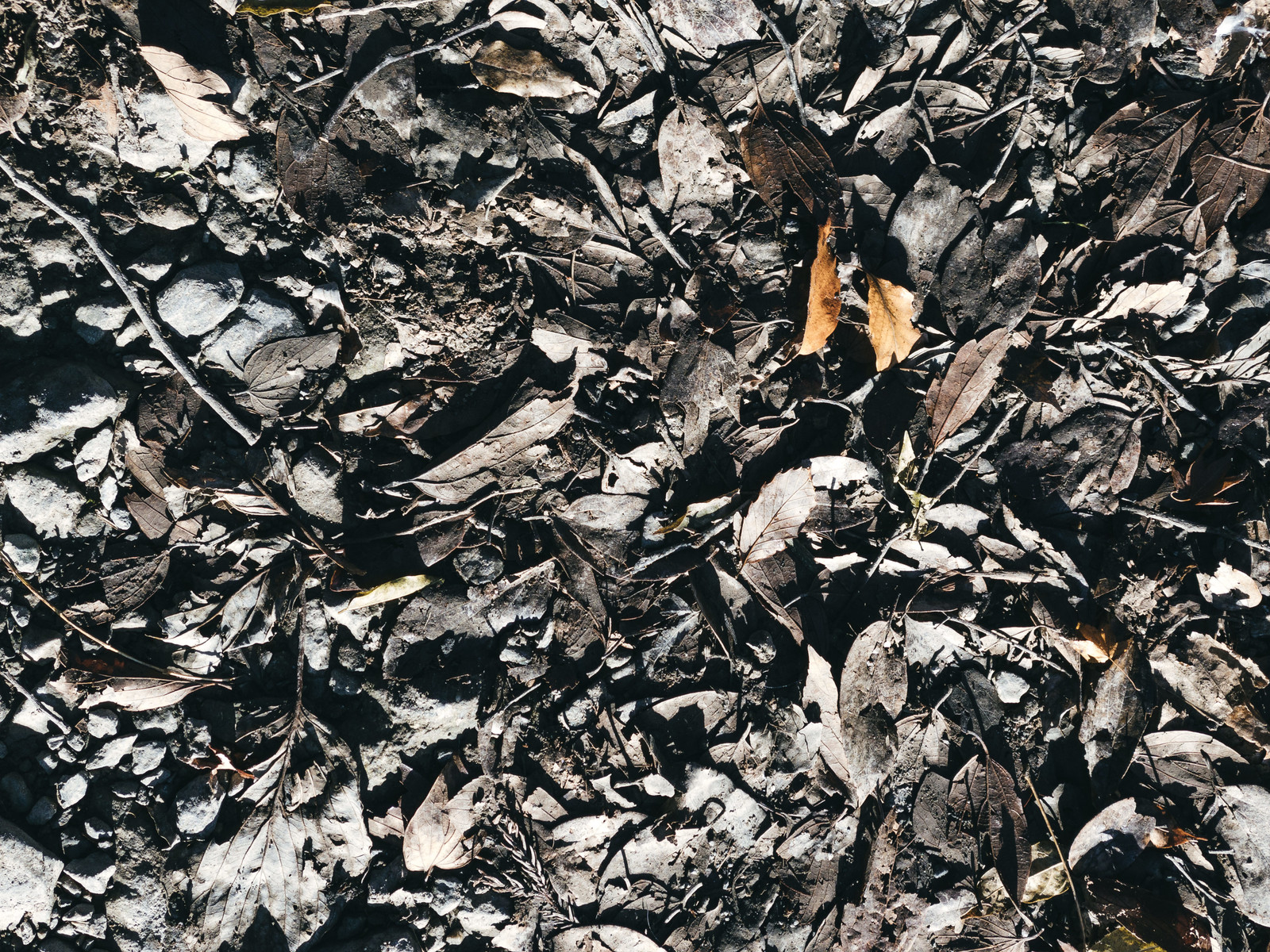 「泥の中の落ち葉」の写真