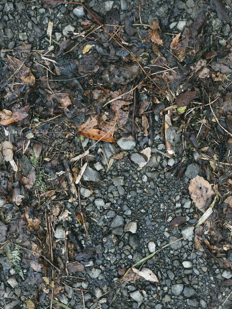 「湿った落ち葉の散乱した地面(テクスチャ)」の写真