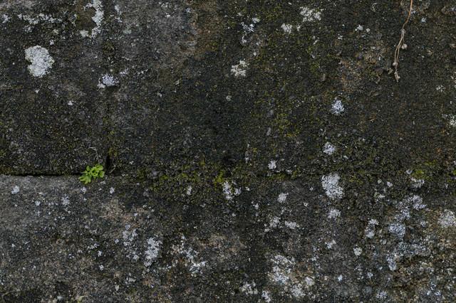 苔が生えた壁(テクスチャ)の写真