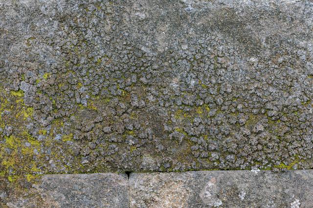 劣化したアスファルトに苔(テクスチャ)の写真