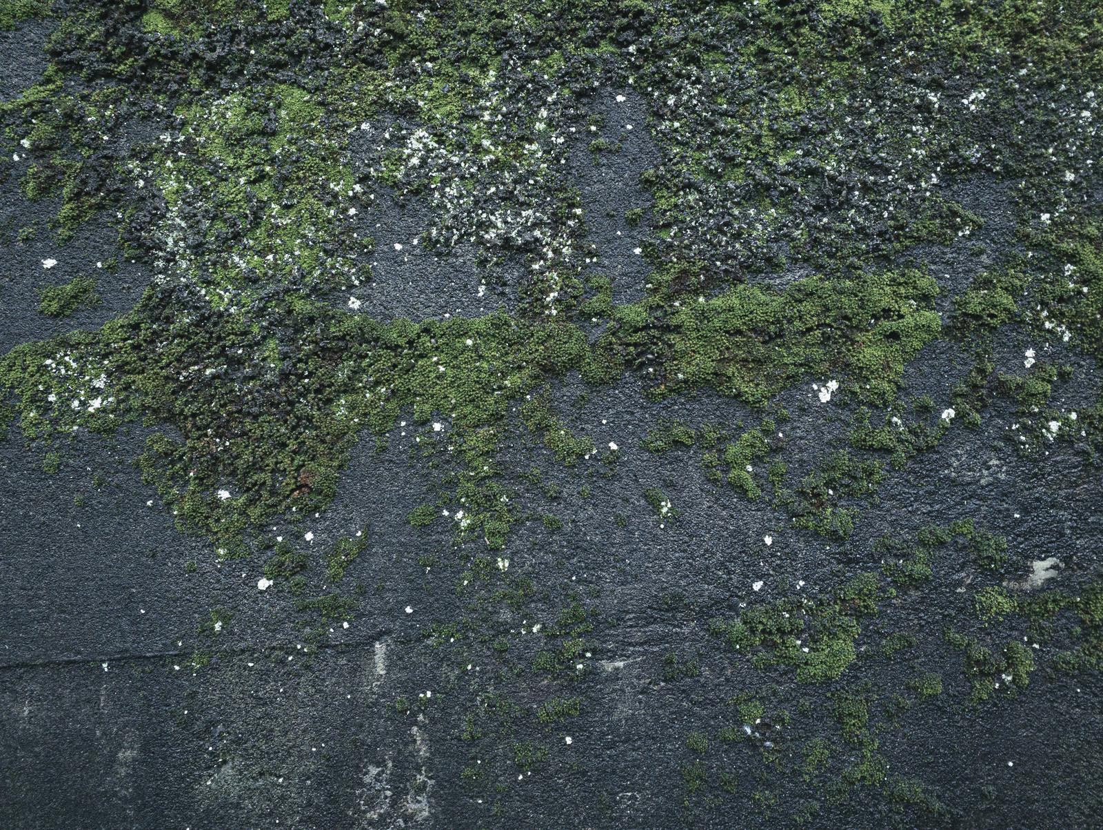「苔むした濡れたコンクリート壁(テクスチャ)」の写真