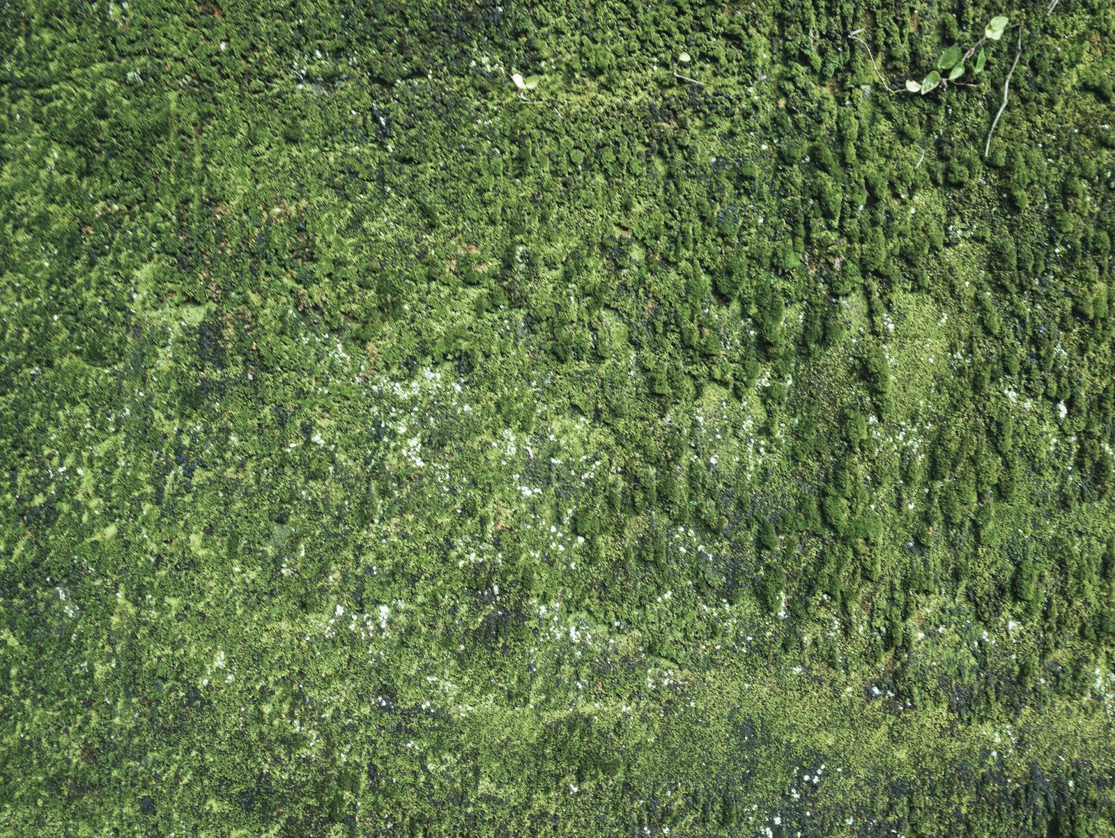 「苔むした壁(テクスチャ)」の写真