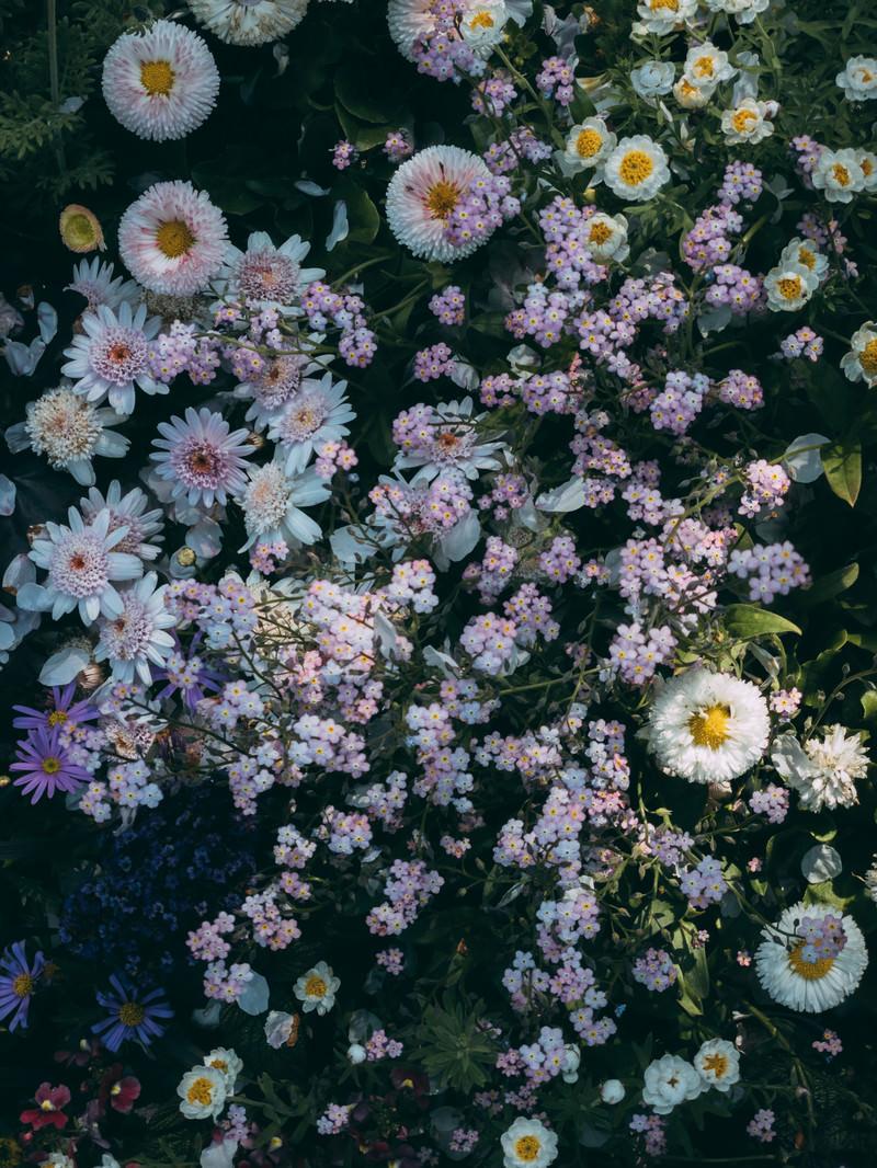 「小さい花が咲く花壇」の写真