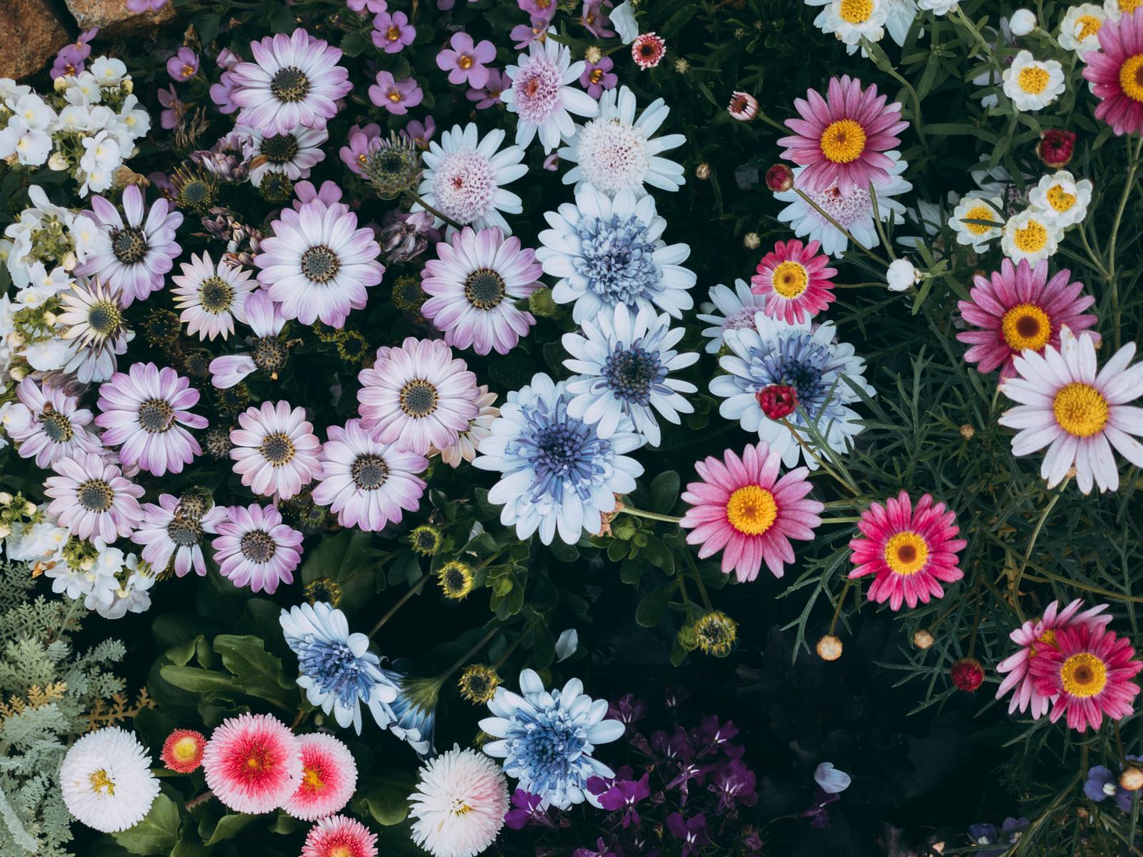 「まんまるお花が咲く花壇」の写真