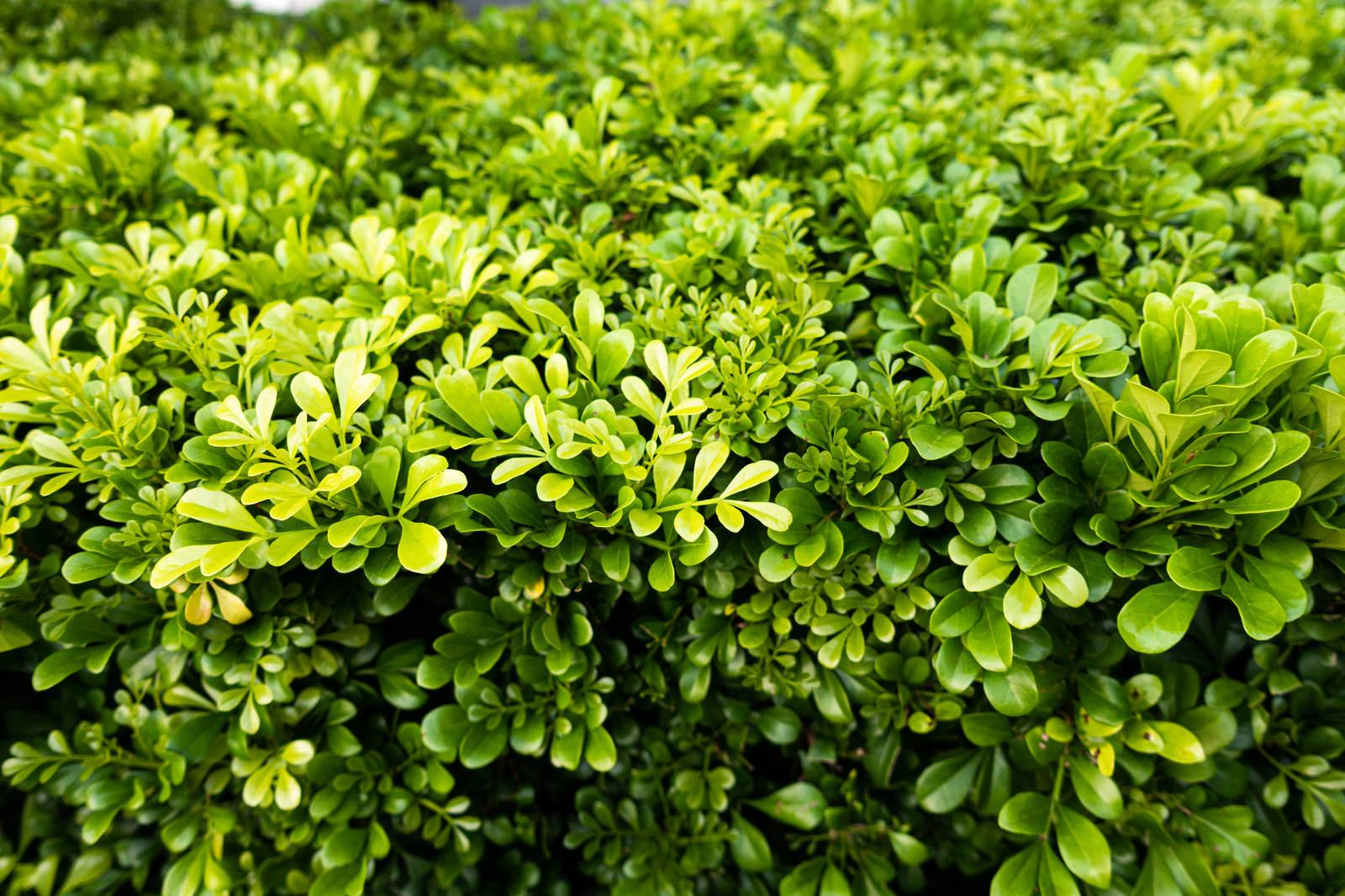 「歩道によくある植物」の写真