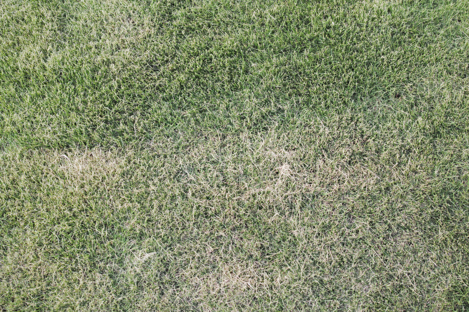 「芝生のテクスチャ」の写真