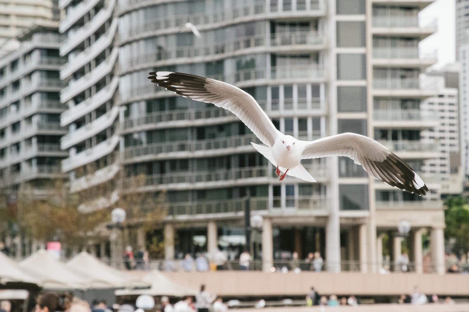 「観光地で飛び立つかもめバッサー観光地で飛び立つかもめバッサー」のフリー写真素材を拡大