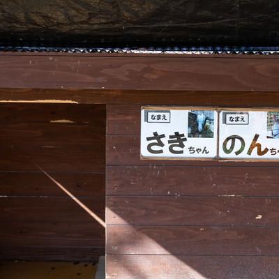 崎野自然公園で飼育されてる山羊の名前(さきちゃんとのんちゃん)の写真