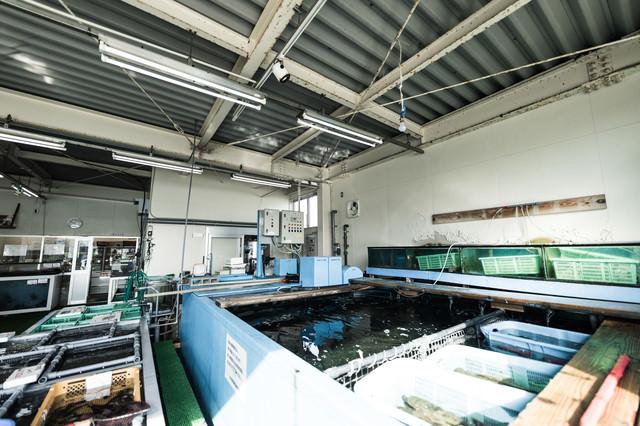 大村湾漁協組合の大きな生簀の写真