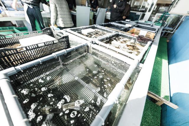 大村湾漁協組合で買い物する人と生簀の写真