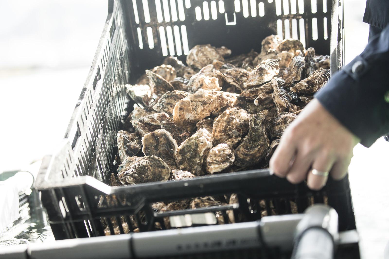 「大村湾で獲れた牡蠣」の写真