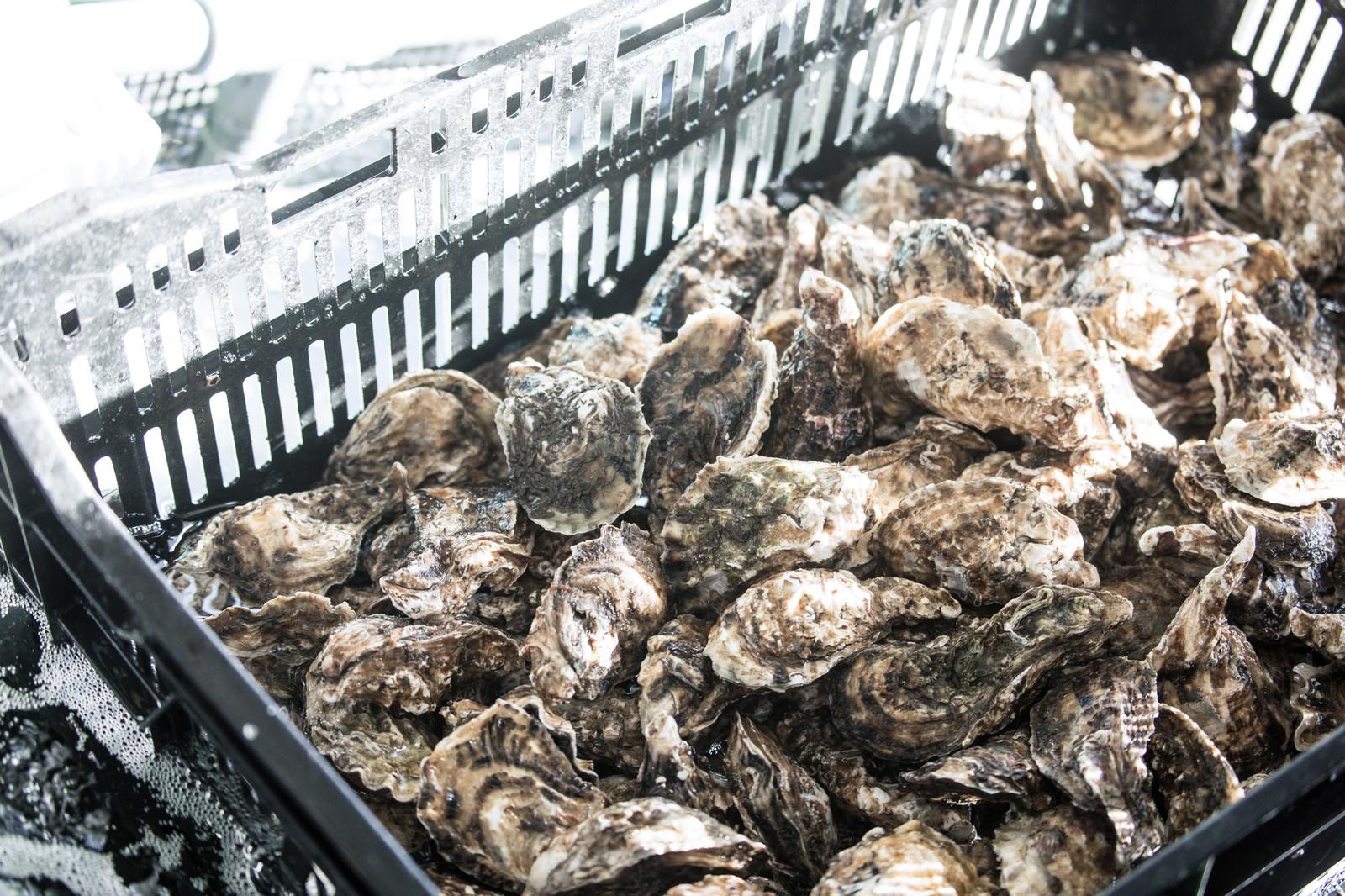 「大村湾漁協組合で販売している獲れたての牡蠣」の写真