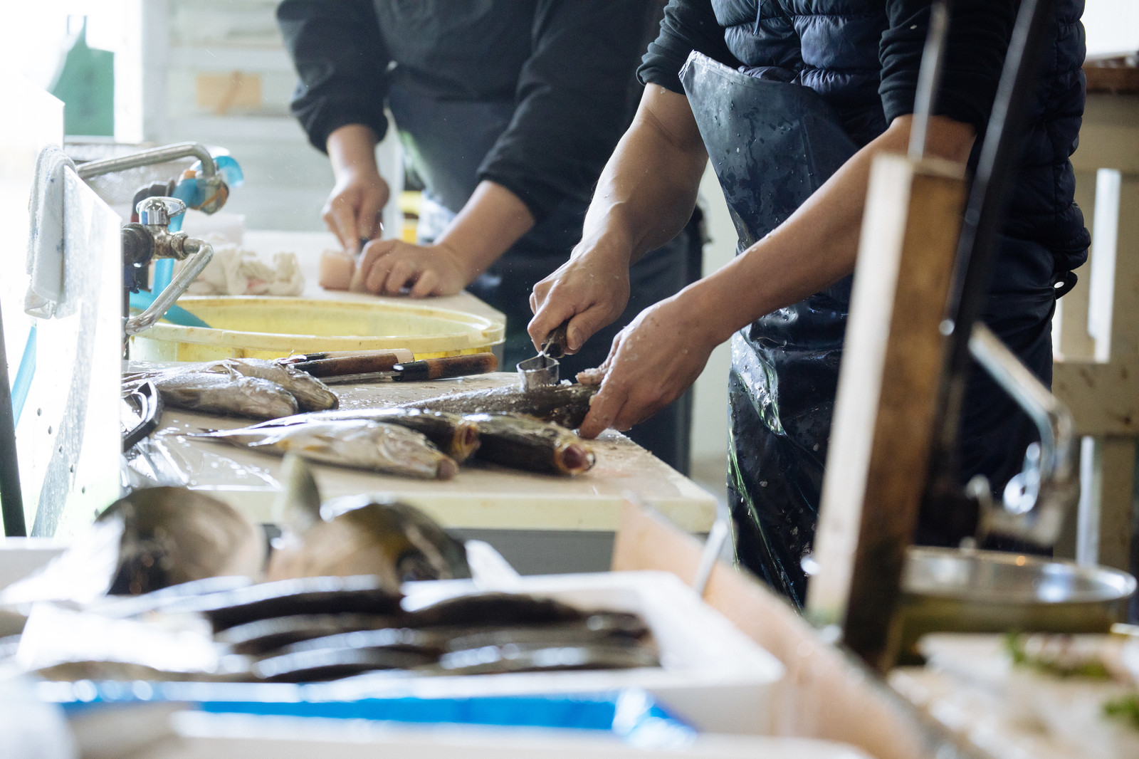 「活・鮮魚をさばく水産加工の様子(大村湾漁協組合)」の写真