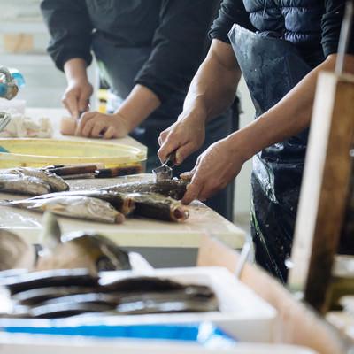活・鮮魚をさばく水産加工の様子(大村湾漁協組合)の写真