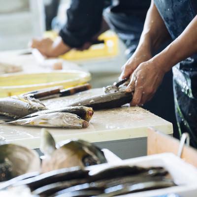 大村湾漁協組合で魚の下ごしらえの写真