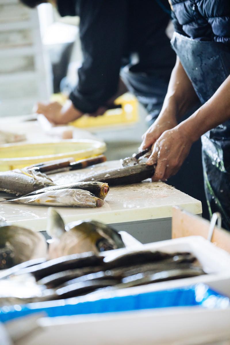 「大村湾漁協組合で魚の下ごしらえ」の写真