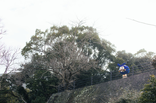 鳴鼓岳の駐車場に取り残されたゆるキャラ(とっきー)の写真